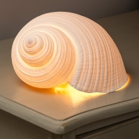 Sea Shell Light Product Photography